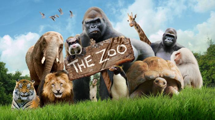 """Nowy serial """"Zoo"""" od 19 sierpnia w Boomerangu"""
