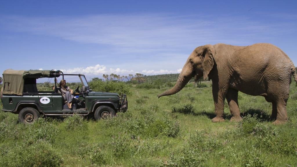 Sekretne życie słoni