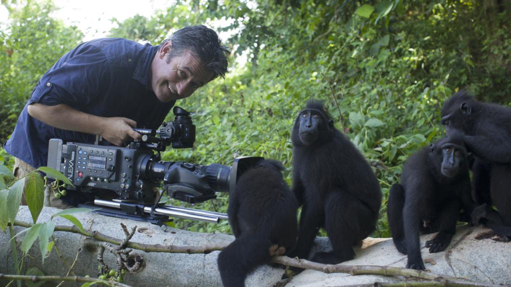 Witamy wśród małp
